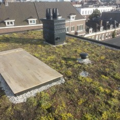 Sedumdak Overamstelstraat Joru Support Greenroof